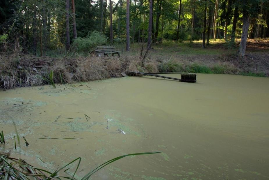 Malý šebíkovský rybník. Autor: D. Stráník.